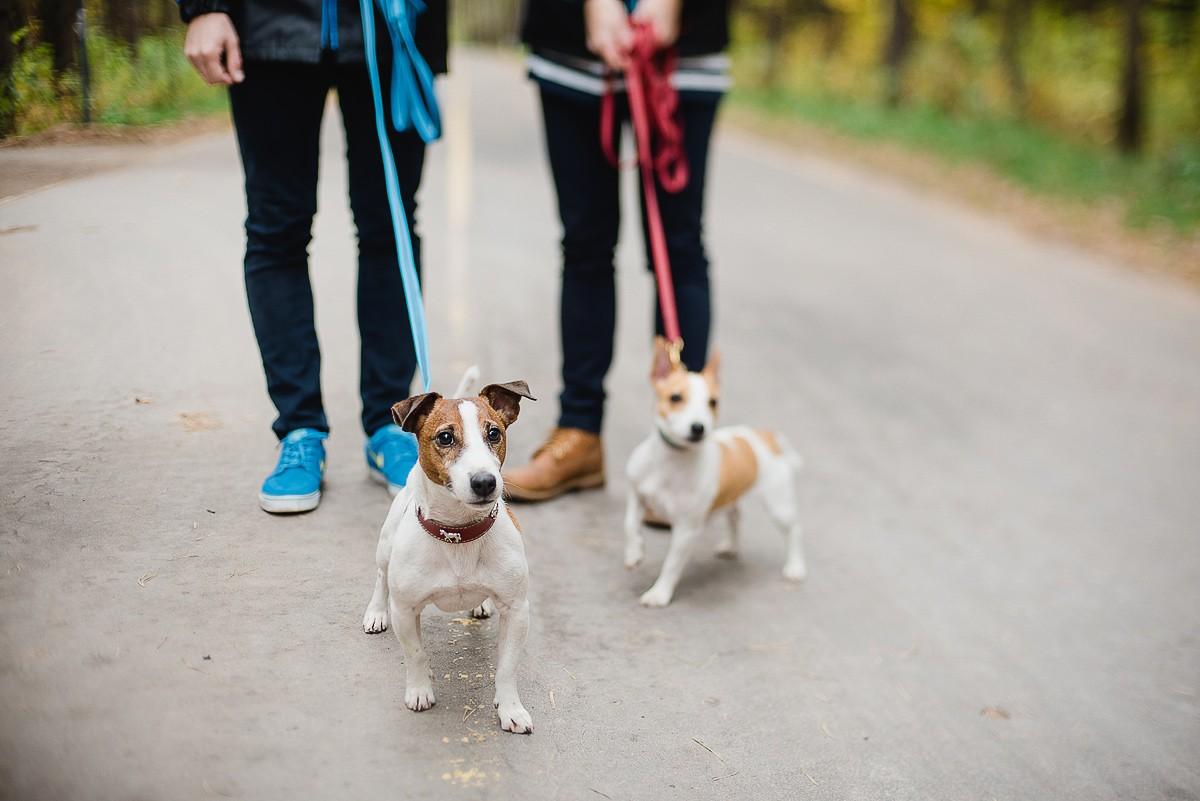 Выгул собак Надодог