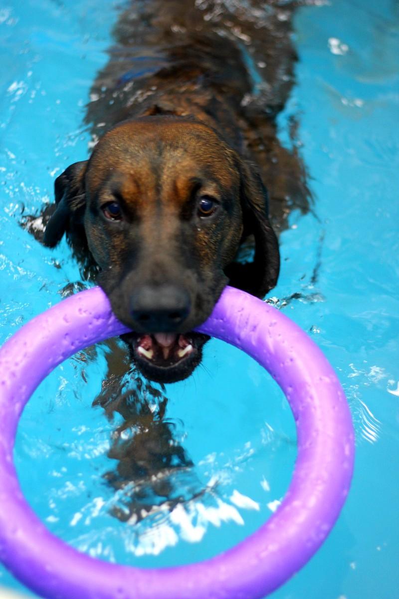 Фитнес для собак Надодог